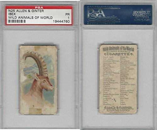 N25 Allen & Ginter, Wild Animals, 1888, Ibex, PSA 1 from OpenBinders