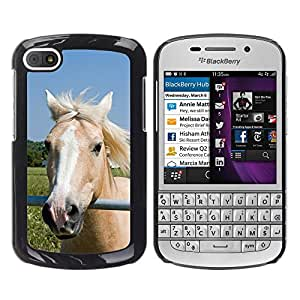 Hot Style Cell Phone PC Hard Case Cover // M00108169 Horse Pony Palomino Head Face // BlackBerry Q10