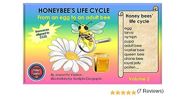 Amazon.com: Science: Honeybee's Life Cycle Volume 2, honey bees ...
