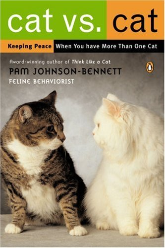 cat-vs-cat-keeping-peace-when-you-have-more-than-one-cat