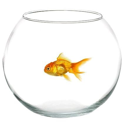 Takestop® Ampolla pecera de cristal transparente 30 cm Acuario para peces pescado rojo Centro Bandeja