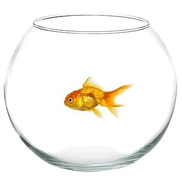 Takestop® - Pecera redonda de vidrio transparente, 25 cm de diámetro, para pez
