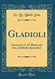 Amazon / Forgotten Books: Gladioli Grown by g. d. Black and Son, Gladiolus Specialists Classic Reprint (G D Black Son)