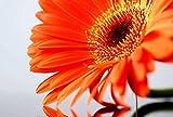 Orange Daisy Flower Art Print Canvas Poster,Home Wall Decor(24x36 inch)