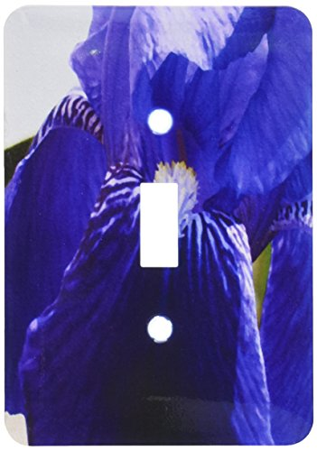 3dRose lsp_50788_1 Purple Iris Oil Painting Single Toggle Switch ()