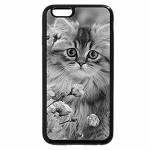 iPhone 6S Plus Case, iPhone 6 Plus Case (Black & White) - Persian kitten among roses