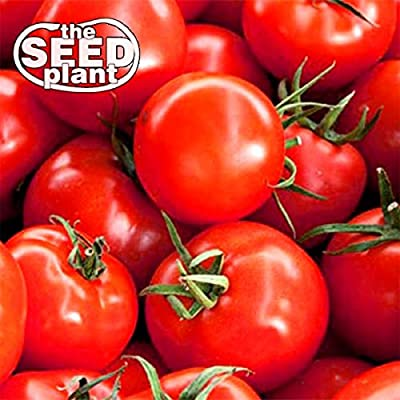 Early Girl Tomato Seeds - 25 Seeds Non-GMO : Garden & Outdoor