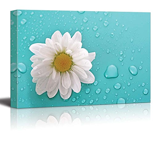 White Daisy Flower on an Aqua Background with Rain Drops