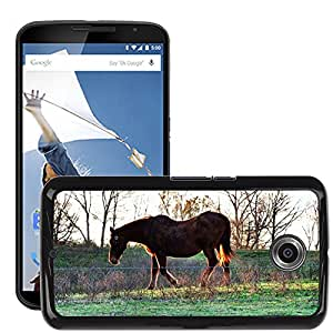 Etui Housse Coque de Protection Cover Rigide pour // M00111806 Caballo de Brown Animales Mamíferos // LG Google Nexus 6