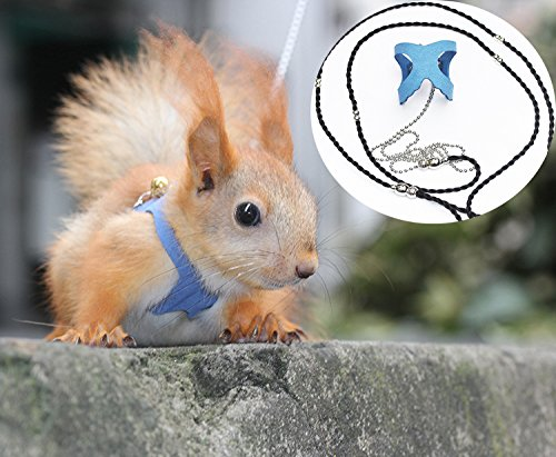 The 10 best squirrel leashes and harnesses 2019