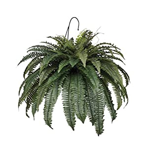 House of Silk Flowers Artificial Fern Hanging Basket 1