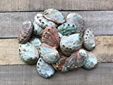 Natural Red Abalone Sea Shell Beach Decor 2'' - 3'' | Set of 100 |