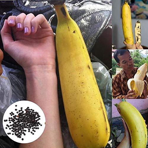 20pcs Rare Edible Giant Banana Seeds Fruit Trees Bonsai Home Garden Planting