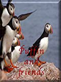 Puffin: Fun facts About Exotic Birds Picture Book For Children (Puffin and Friends, Meet Puffin, Bird Watching, My Exotic Puffin)