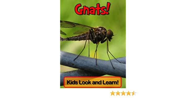 Gnats Learn About Gnats and Enjoy Colorful Pictures Look and Learn (50+ Photos of Gnats)