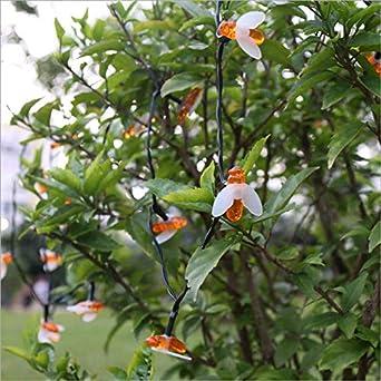 Solar 20LED cadena de cuerdas chica corazón decoración de la habitación patio exterior jardín balcón abeja linterna: Amazon.es: Iluminación