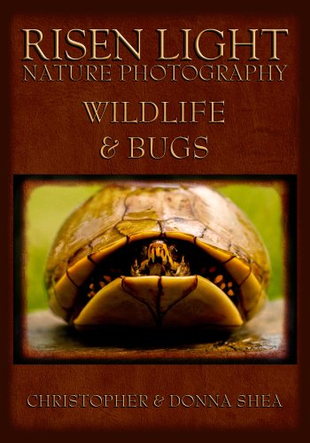 Risen Light Nature Photography of Wildlife & Bugs