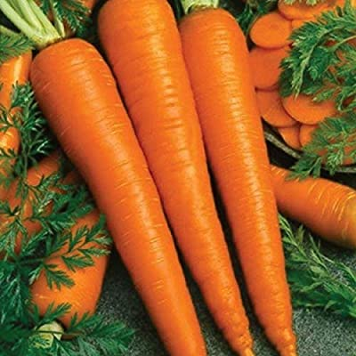 Imperator 58 Carrots - Pelleted Seeds (40 Seed Pack) : Garden & Outdoor