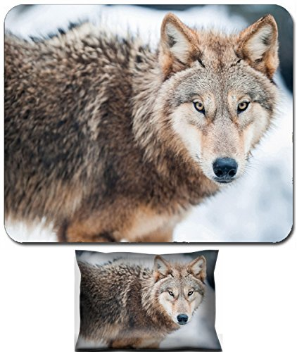 Eye Foam Cane (Luxlady Mouse Wrist Rest and Small Mousepad Set, 2pc Wrist Support design lat Canis standing in the snow focus is on the eyes IMAGE: 6450280)