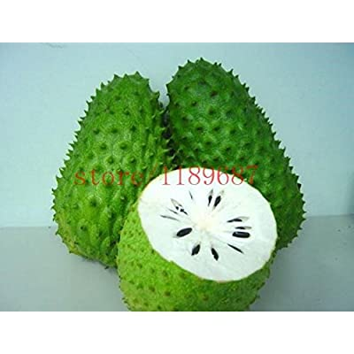 Mr.seeds 20 pcs SOURSOP Graviola Guanabana Annona muricata SEEDS Tropical Fruit NO-GMO good for health : Garden & Outdoor