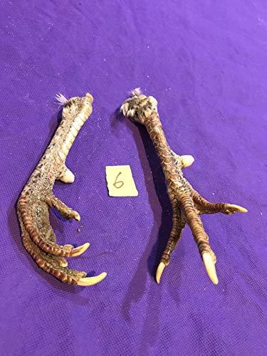 2 Real Chicken Feet Taxidermy Animal Mount Witchcraft Spell Voodoo Art