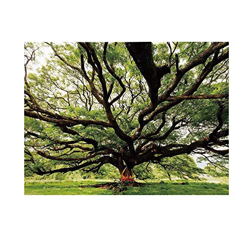 (Nature Photography Background,The Largest Monkey Pod Tree in Thailand Eastern Green Big Branches Growth Eco Photo Backdrop for)