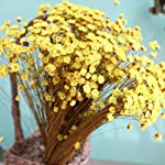 Vosarea-100pcs-Lovely-Mini-Daisy-Decorative-Dried-Flowers-Small-Star-Flower-Natural-Floral-for-Photograph-Wedding-Home-Decoration-Yellow