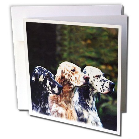 Dogs English Setter - English Setter - 6 Greeting Cards with envelopes (gc_712_1)