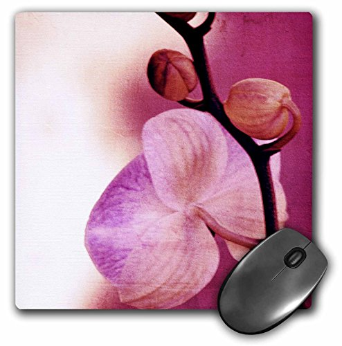 3drose-llc-8-x-8-x-025-inches-mouse-pad-zen-pink-orchid-flower-floral-art-nature-mp-38012-1