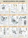 Musculation des jambes : Poster