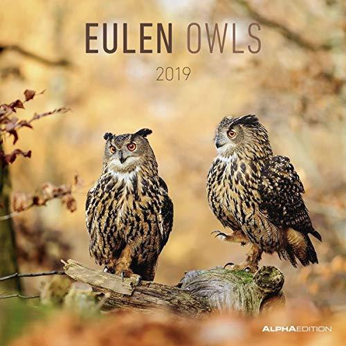 Eulen 2019   Owls   Broschürenkalender  30 X 60 Geöffnet    Tierkalender   Wandplaner