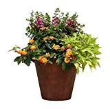 Burpee Combo 'Simpatico' - Create Instant Colorful Container Gardens with Eight 4 in. pots