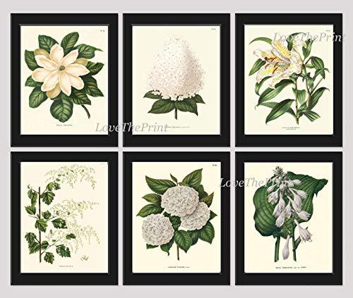 Botanical Flower Print Set of 6 Prints Antique Beautiful White Lily Magnolia Hydrangea Spring Summer Garden Nature Home Room Decor Wall Art Unframed