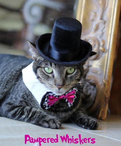 Pampered Whiskers Top Hat for Dogs and Cats – The Aristocrat