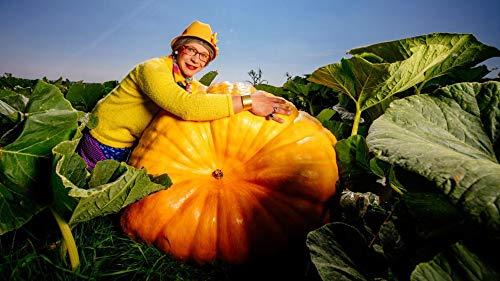 Rarit/ät Riesen-K/ürbis Atlantic Giant 40-80 Kilo Gem/üse Samen 20pcs Saatgut Bio winterhart mehrj/ährig zum Schnitzen von Masken f/ür Halloween Laternen Keland Garten