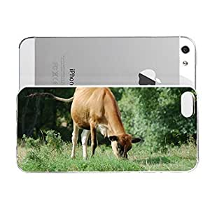 Animal - Cow Eating The Grass for iPhone 5/5s Case - Designed Specifically for iPhone 5/5S case with a Slim Design
