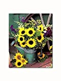 Sunflowers in Watering Can #2 Rustic Shed Wooden Wheel Wall Picture 8x10 Art Print