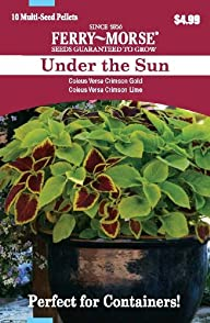 Ferry Morse 2175 Container Combinations, Coleus-Under the Sun (Discontinued by Manufacturer)