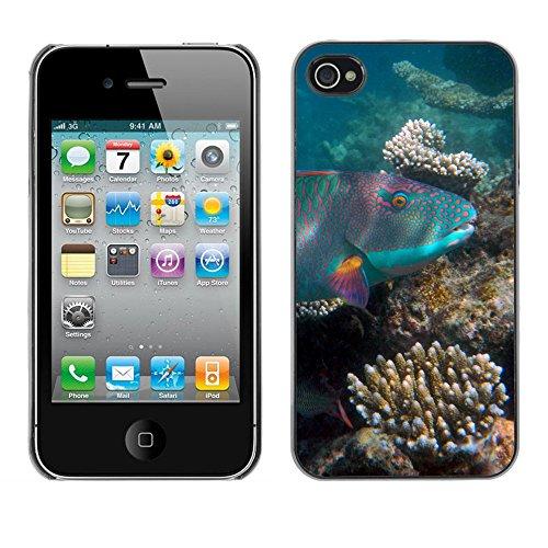 Premio Sottile Slim Cassa Custodia Case Cover Shell // F00012546 poisson // Apple iPhone 4 4S 4G