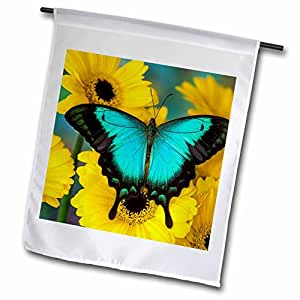 Danita Delimont–diseño de mariposas–mar verde Swallowtail Butterfly–banderas
