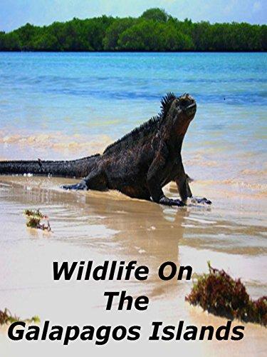 Wildlife On The Galapagos Islands