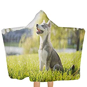 painting-home Alaskan Malamute,Baby Hooded Towel Made by Natural Materials Klee Kai Puppy Sitting on Grass Looking Up Friendly Young Cute Animal Soft and Absorbent Multicolor,51.5 x 31.8 inch 27