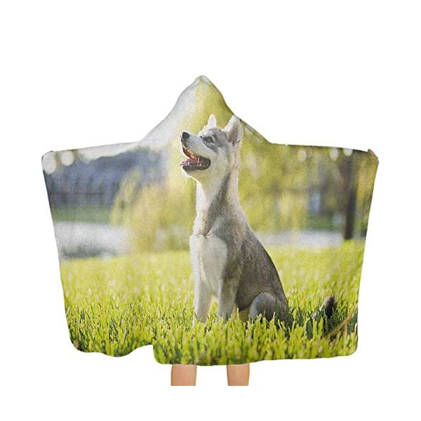painting-home Alaskan Malamute,Baby Hooded Towel Made by Natural Materials Klee Kai Puppy Sitting on Grass Looking Up Friendly Young Cute Animal Soft and Absorbent Multicolor,51.5 x 31.8 inch 1