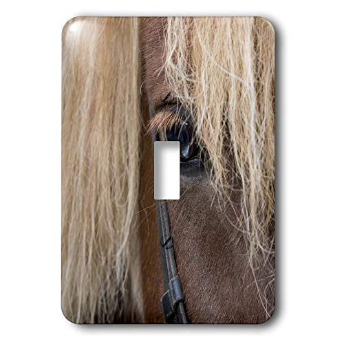 - 3dRose Danita Delimont - Horses - Detail of sorrel horse with flax mane. - 2 plug outlet cover (lsp_313644_6)