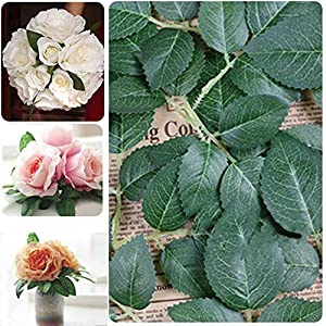 BeesClover 10/20/50Pcs Artificial Springs Rose Leaf Silk Green Leaf Craft Buttonhole Wedding Decor Green Leaf Home Party Decoration 107