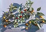 "10 BODE Hot Pepper Seeds - A tiny pepper from Brazil ""VERRY HOT"" Fruity flavor"