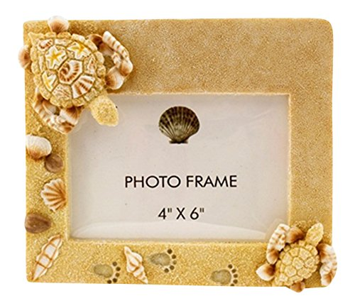 Coastal Sea Turtles in the Sand with Shells 4X6 Inch Resin Desk Photo - Sea Frame Shell