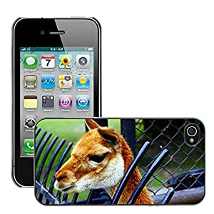 Just Phone Cases Slim Protector Hard Shell Cover Case // M00127548 Lama Animal Fauna Mammal Catwalk // Apple iPhone 4 4S 4G