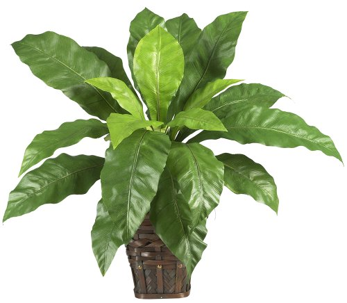 Nearly Natural 6530 Bird Nest Fern with Wicker Basket, Green