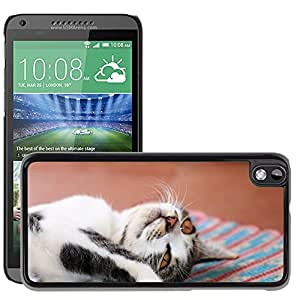 Super Stella Slim PC Hard Case Cover Skin Armor Shell Protection // M00147543 Kitten Feline Animal Cat Laziness // HTC Desire 816